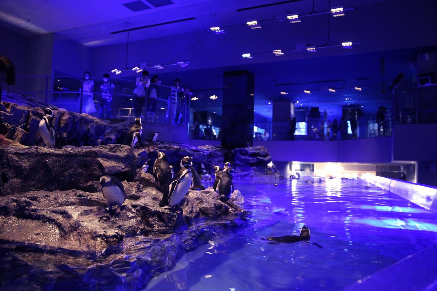 墨田区立の小学生[無料]も 夜の水族館でホタル観賞(すみだ水族館)