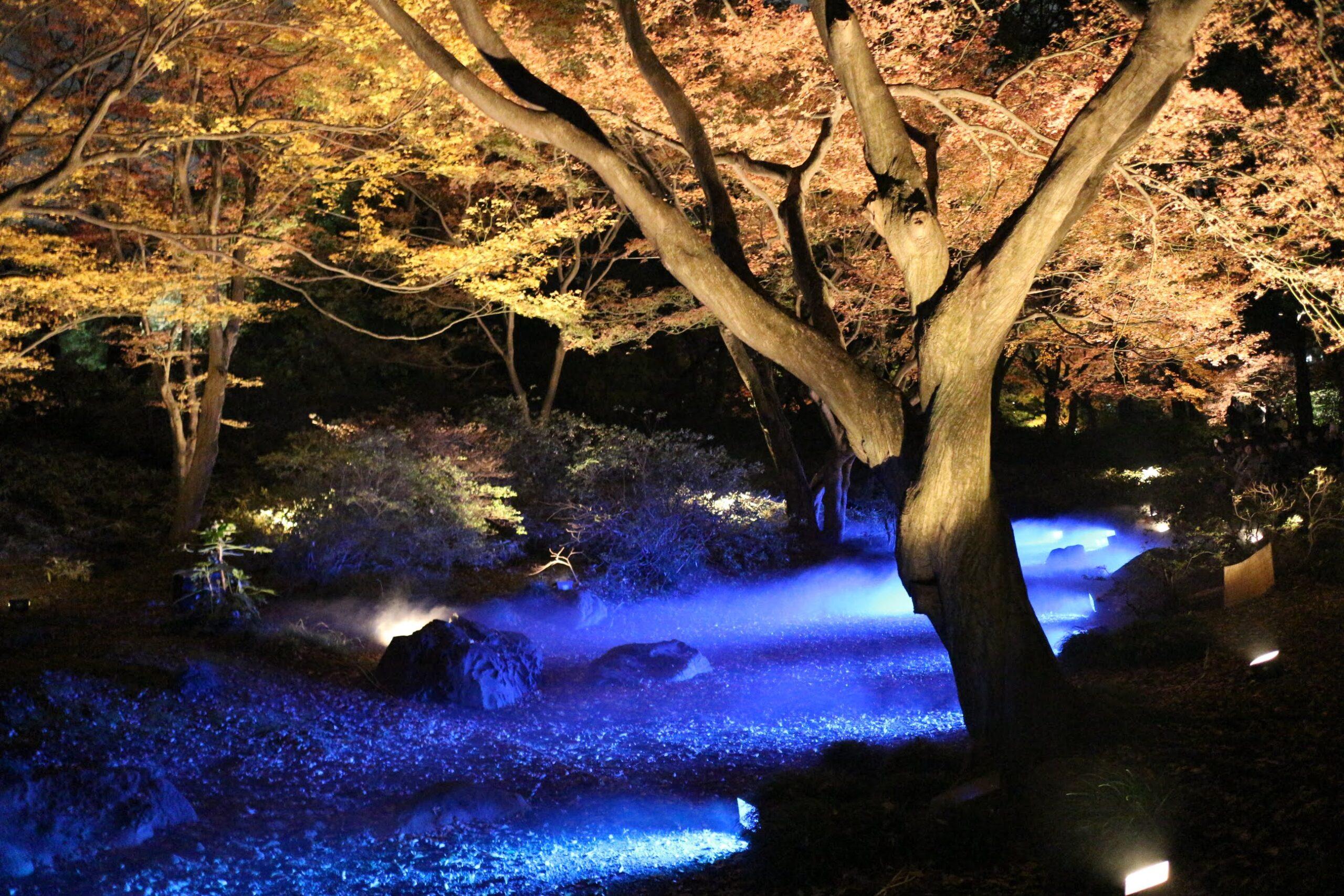 [2019] 六義園の「紅葉と大名庭園のライトアップ」は11/20(水)より