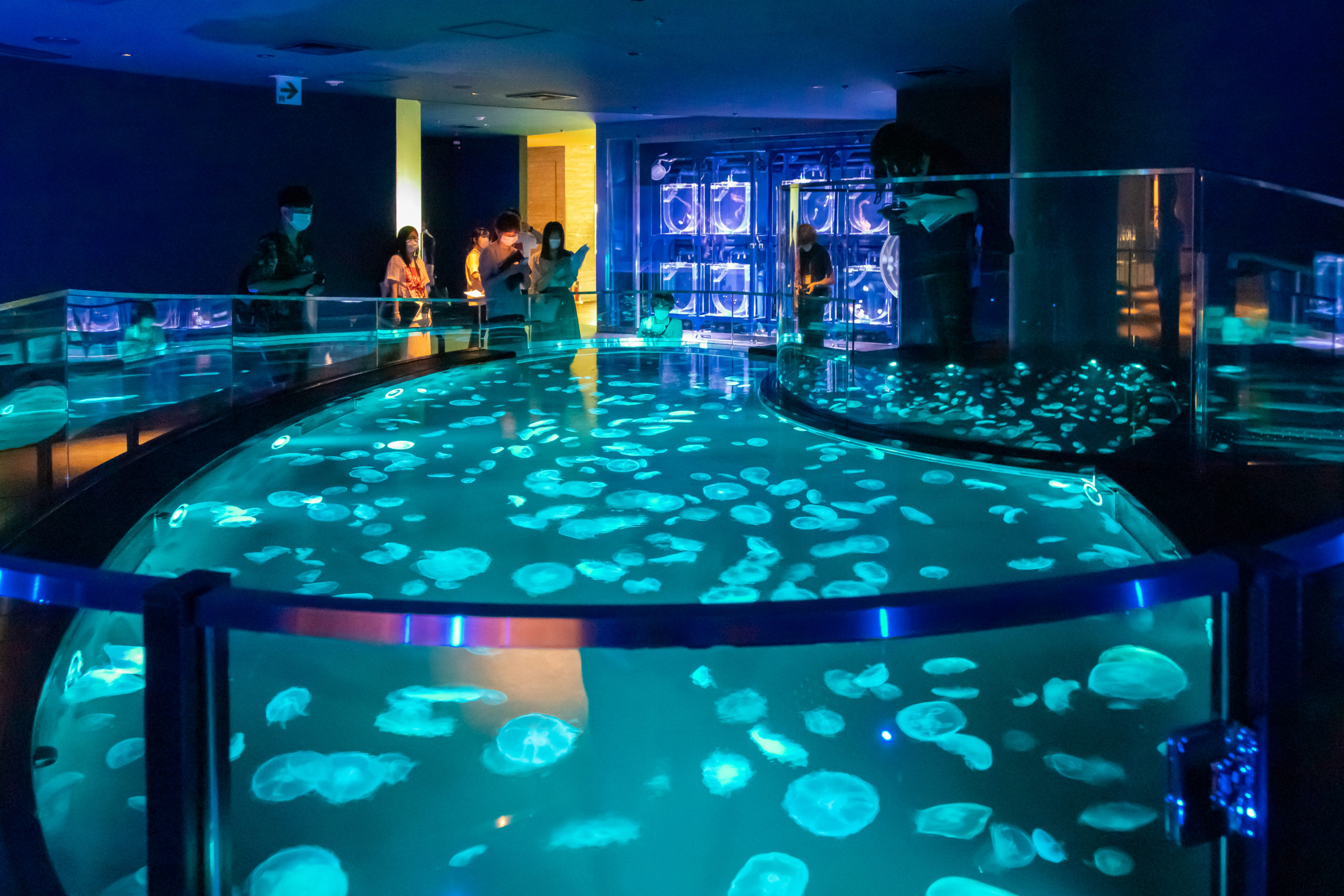 [日本最大級のクラゲ水槽] 大規模リニューアルされた「すみだ水族館」は「へだてないこと」がコンセプト