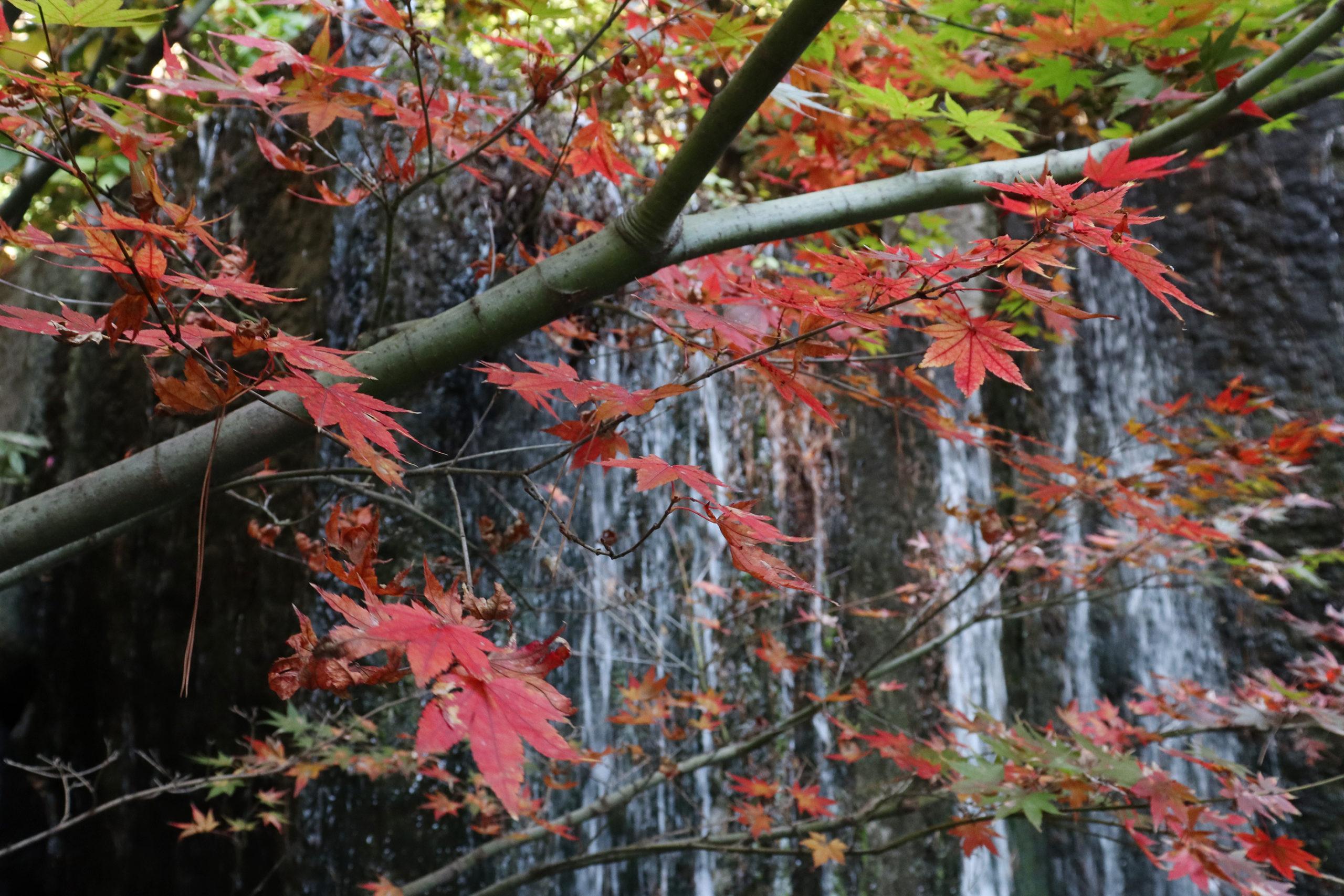 目黒川の紅葉&百段階段で目黒の秋を満喫 (ホテル雅叙園東京)