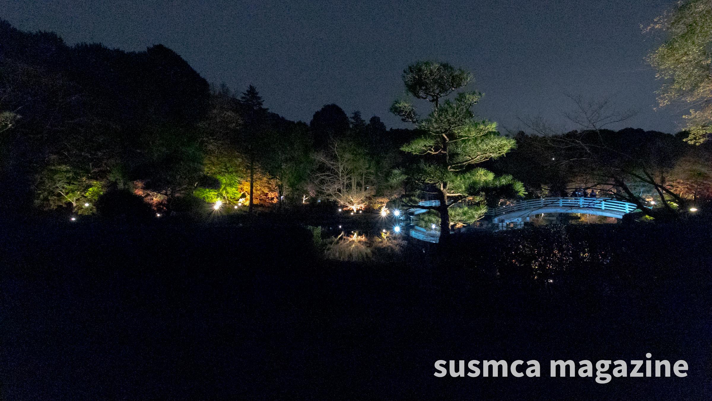 薬師池公園のライトアップに行ってきた2020(東京・町田)
