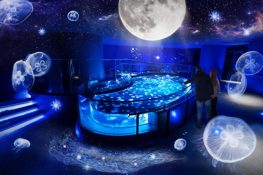 冬企画「月とクラゲ」 すみだ水族館のクラゲ水槽「ビッグシャーレ」に期間限定演出が登場!