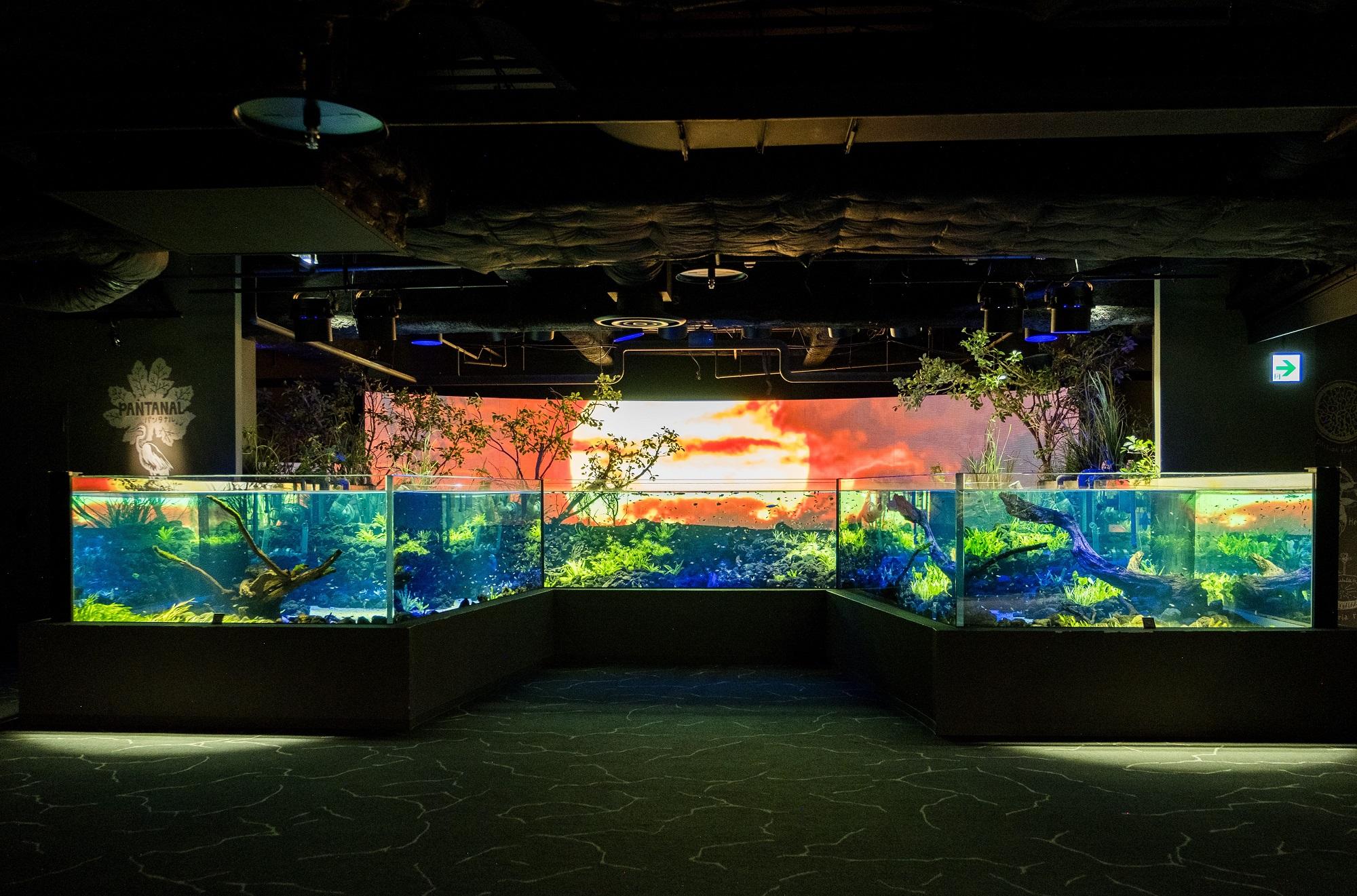 カワスイ 川崎水族館が一部制に営業体制を変更 緊急事態宣言解除後