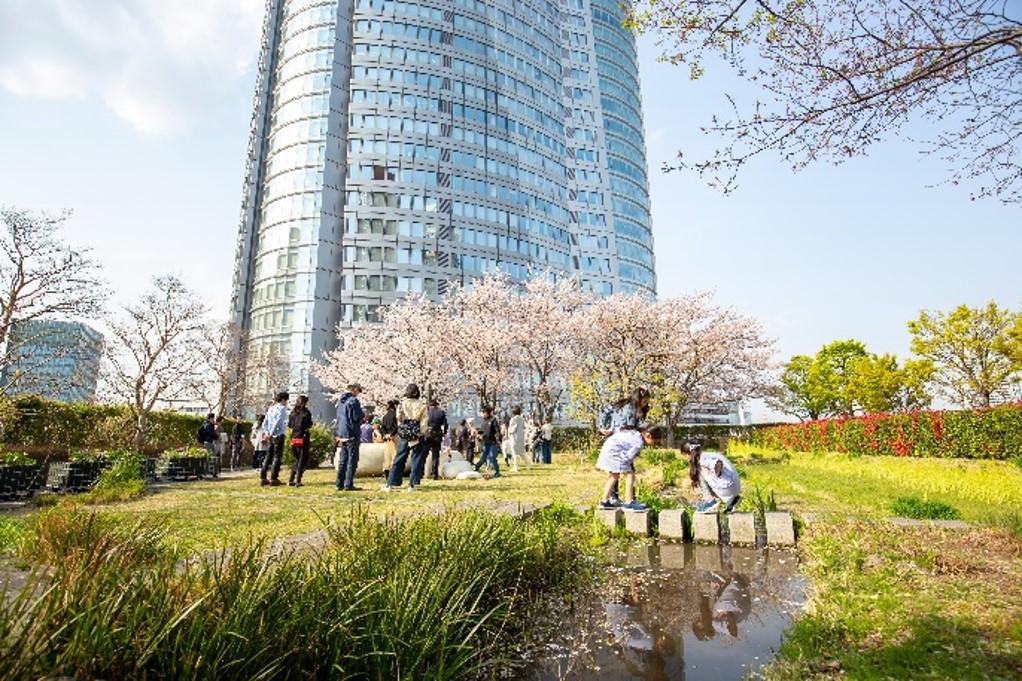 《地上45M》 六本木ヒルズ屋上庭園で桜の開花を確認! 2021年3月17日(水)