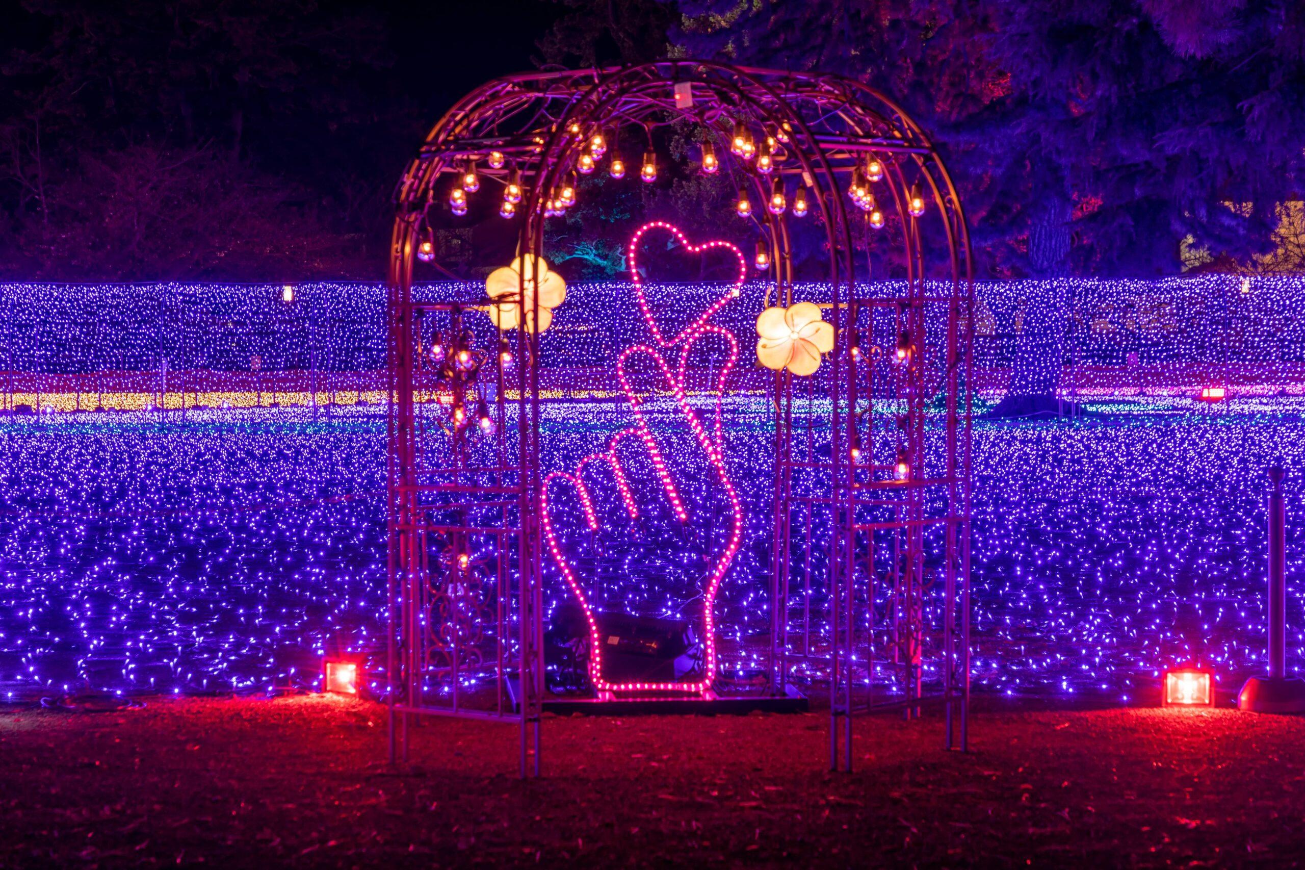 小田原城址公園二の丸広場 初開催!!23万球のライトが彩るイルミと桜の競演『小田原城 春のイルミネーション~光の回廊~』