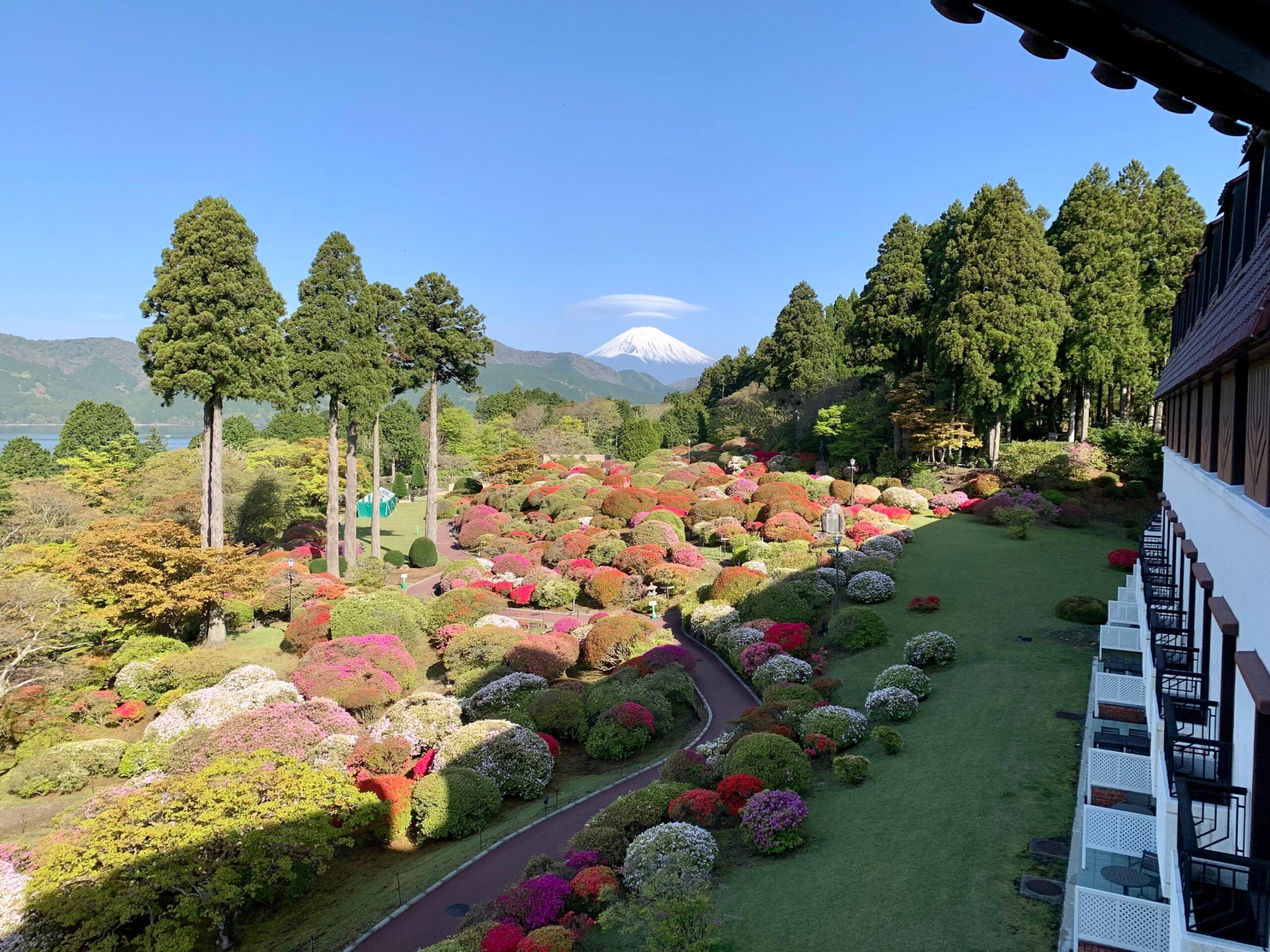 箱根・小田急 山のホテルのツツジ庭園は現在5分咲き(2021/5/01) 「つつじ・しゃくなげフェア2021」開催中